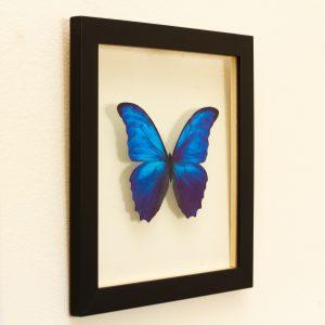 quadro-borboleta-azul-2 | Wall Done