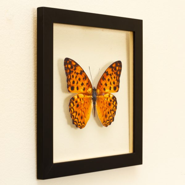 quadro-borboleta-amarela-2 | Wall Done