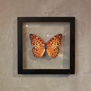 quadro-borboleta-amarela-3 | Wall Done