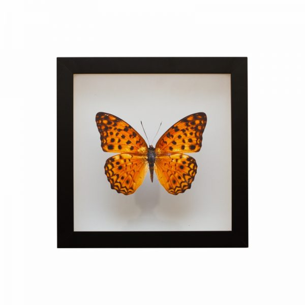 quadro-borboleta-amarela | Wall Done