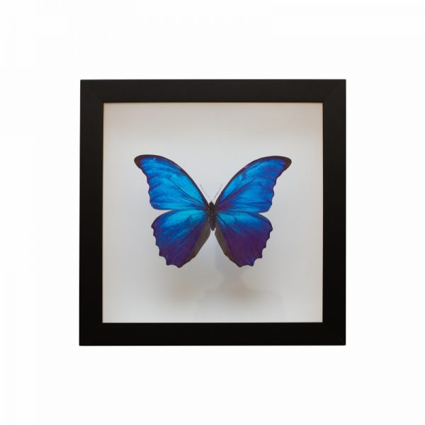 quadro-borboleta-azul | Wall Done