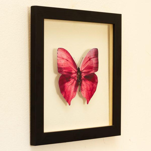 quadro-borboleta-rosa-2 | Wall Done