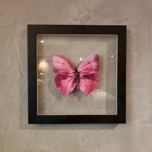 quadro-borboleta-rosa-3 | Wall Done