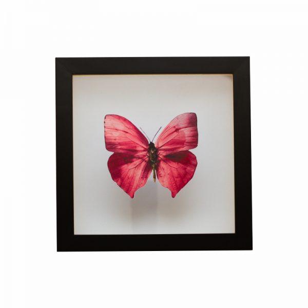 quadro-borboleta-rosa | Wall Done