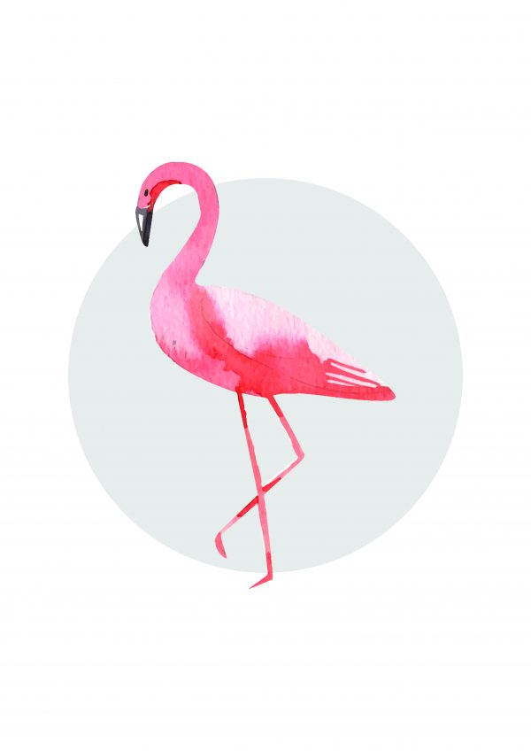 poster-flamingo-walldone