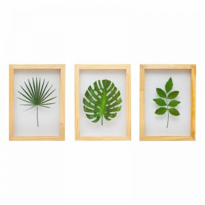 kit-quadros-plantas-walldone