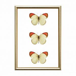 quadro-borboletas-moldura-dourada-walldone