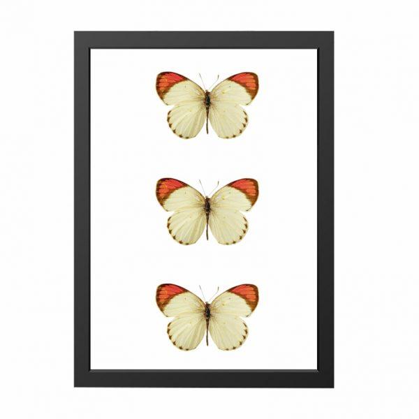quadro-borboletas-moldura-preta-walldone